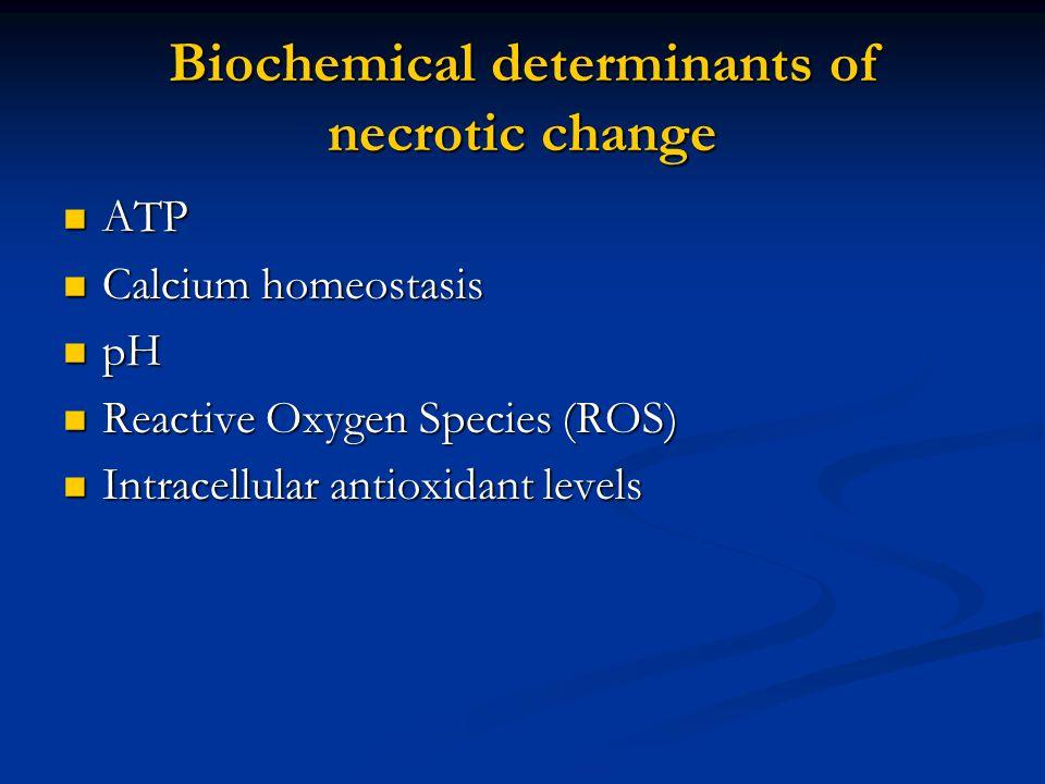 Biochemical determinants of necrotic change ATP ATP Calcium homeostasis Calcium homeostasis pH pH Reactive Oxygen Species (ROS) Reactive Oxygen Specie