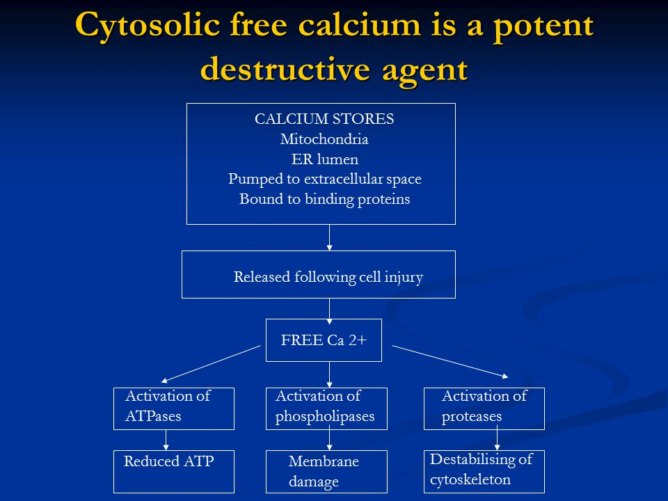 Cytosolic free calcium is a potent destructive agent CALCIUM STORES Mitochondria ER lumen Pumped to extracellular space Bound to binding proteins Rele