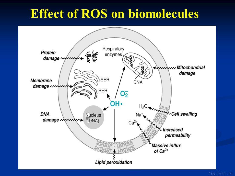 Effect of ROS on biomolecules