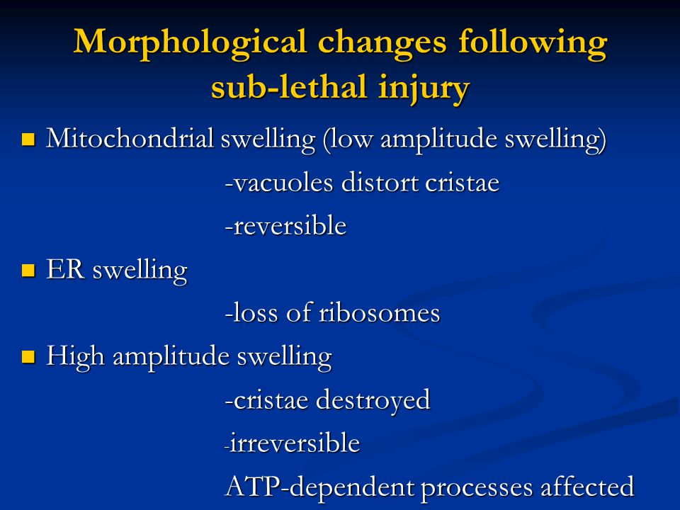 Morphological changes following sub-lethal injury Mitochondrial swelling (low amplitude swelling) Mitochondrial swelling (low amplitude swelling) -vac