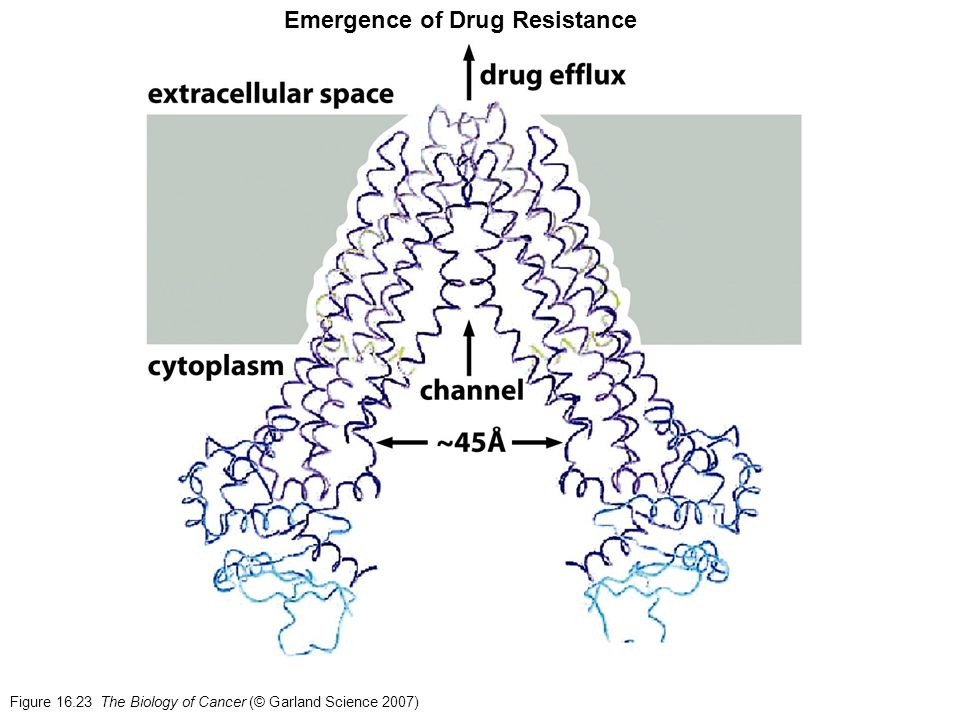 Figure 16.23 The Biology of Cancer (© Garland Science 2007) Emergence of Drug Resistance