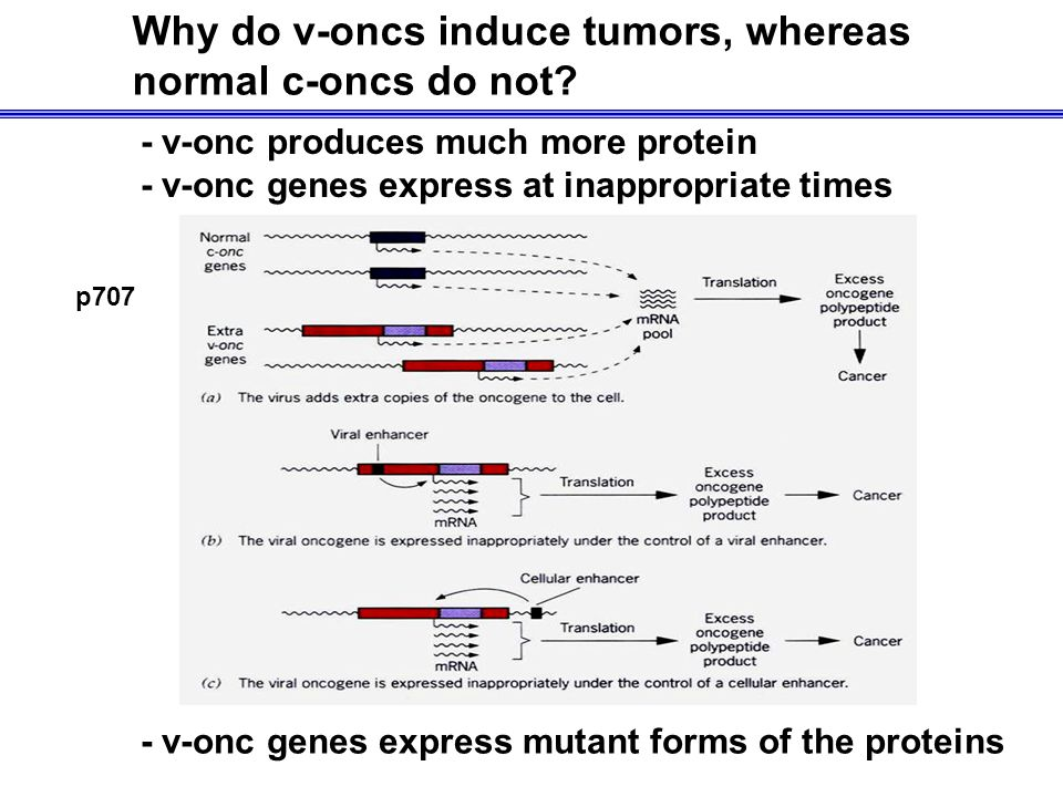Why do v-oncs induce tumors, whereas normal c-oncs do not.