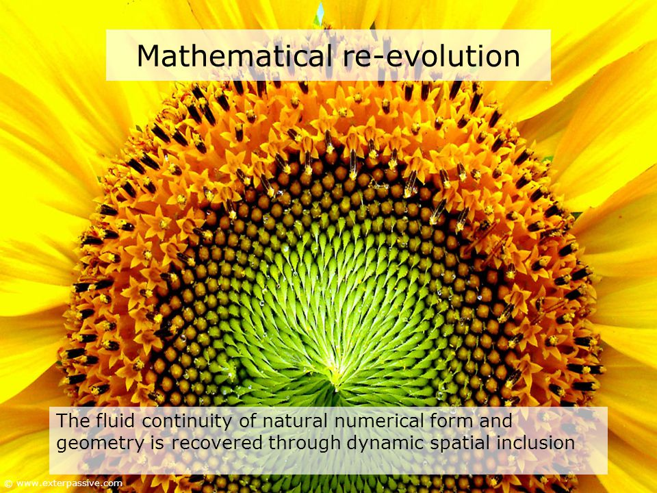 Mathematical re-evolution The fluid continuity of natural numerical form and geometry is recovered through dynamic spatial inclusion © www.exterpassive.com