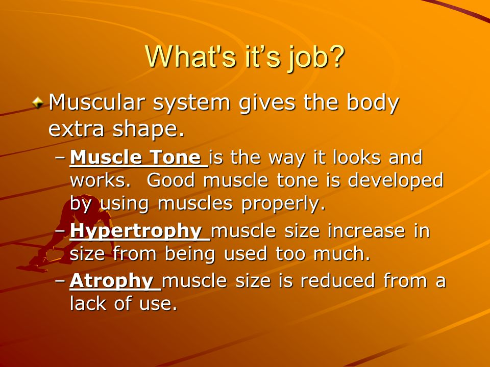 What's it's job? Muscular system gives the body extra shape. –Muscle Tone is the way it looks and works. Good muscle tone is developed by using muscle