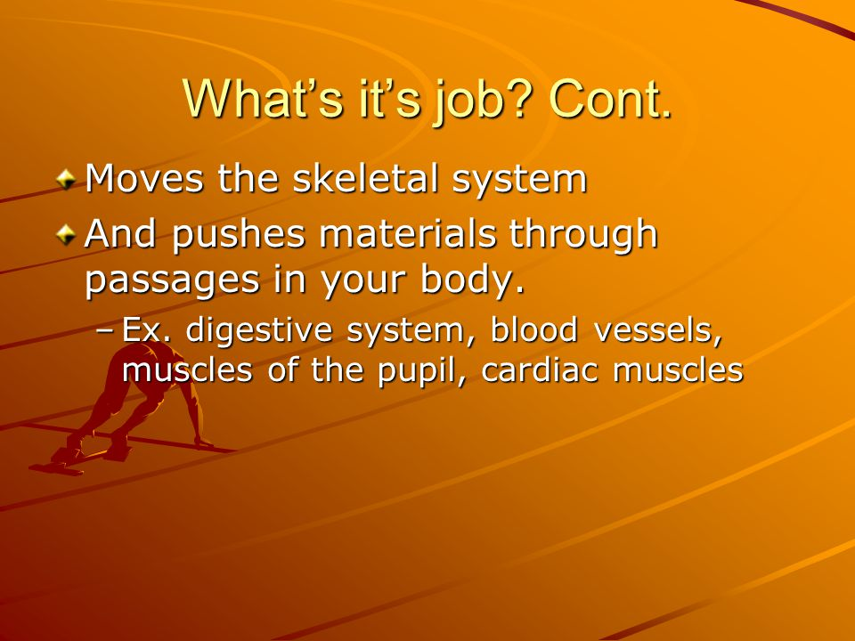 What's it's job? Cont. Moves the skeletal system And pushes materials through passages in your body. –Ex. digestive system, blood vessels, muscles of