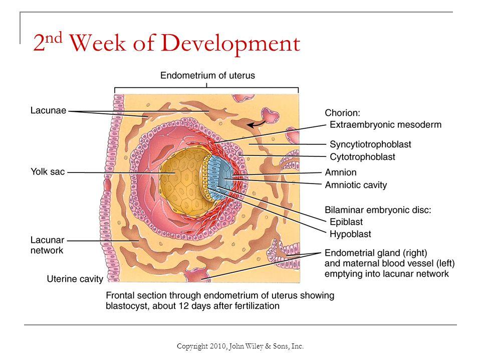 Copyright 2010, John Wiley & Sons, Inc. 2 nd Week of Development