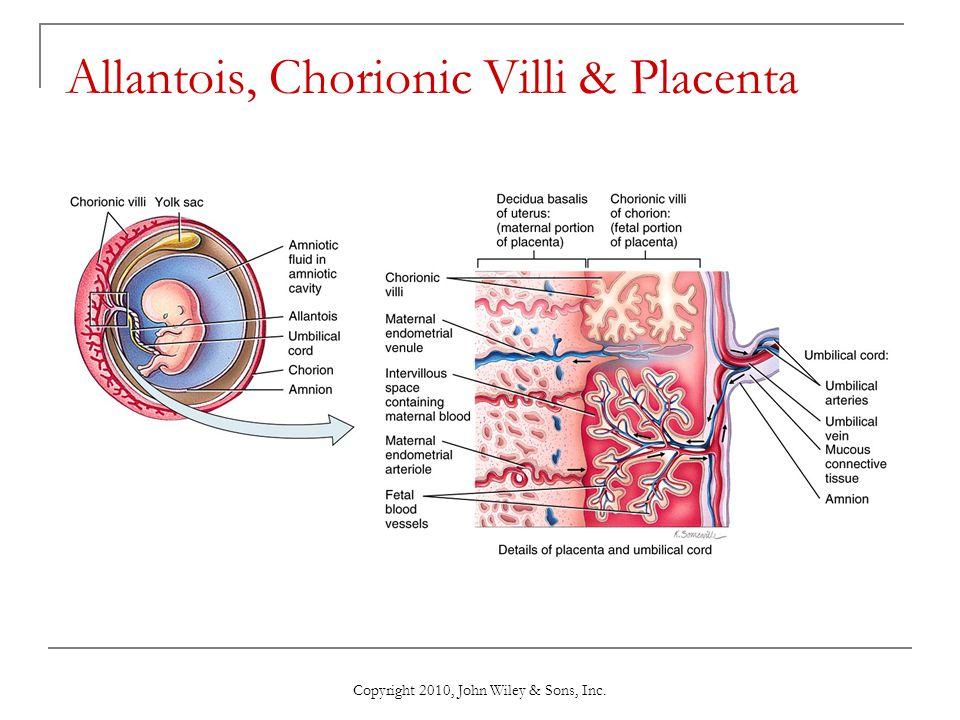Copyright 2010, John Wiley & Sons, Inc. Allantois, Chorionic Villi & Placenta