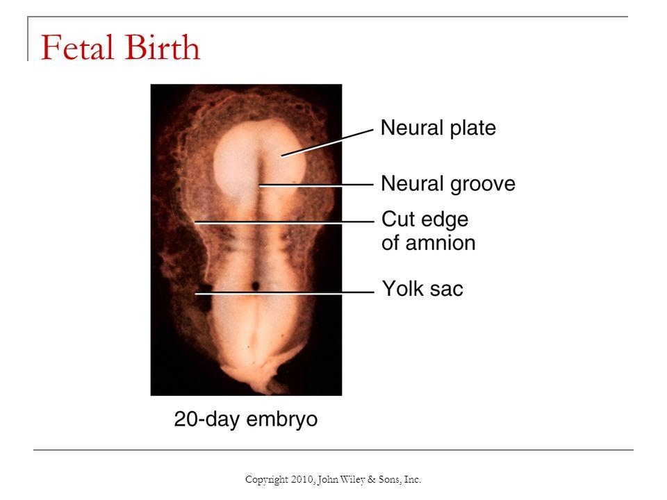 Copyright 2010, John Wiley & Sons, Inc. Fetal Birth