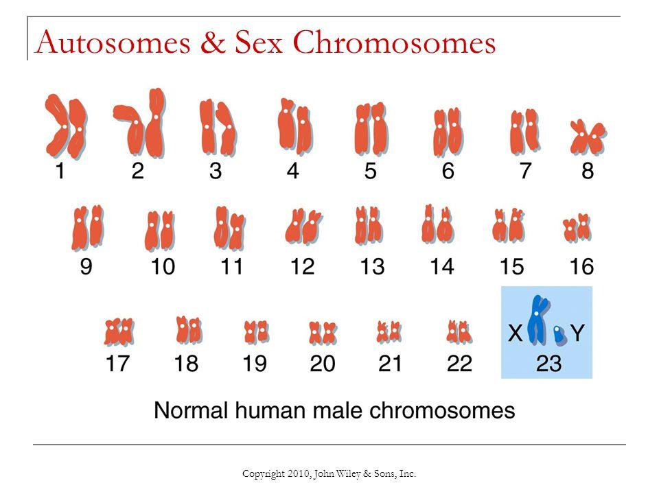 Copyright 2010, John Wiley & Sons, Inc. Autosomes & Sex Chromosomes
