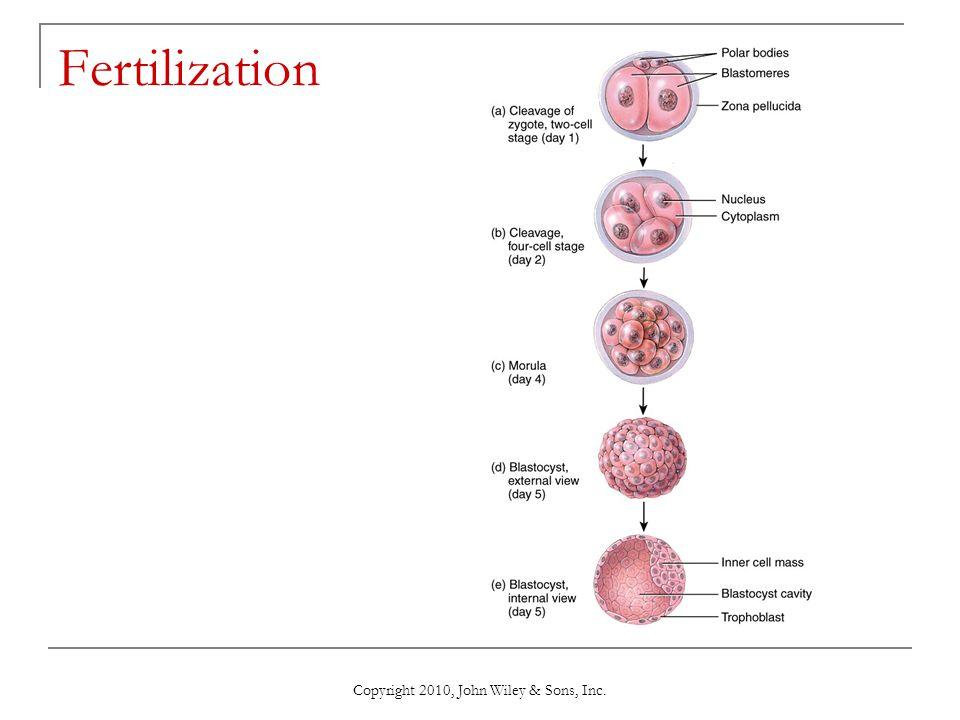Copyright 2010, John Wiley & Sons, Inc. Fertilization
