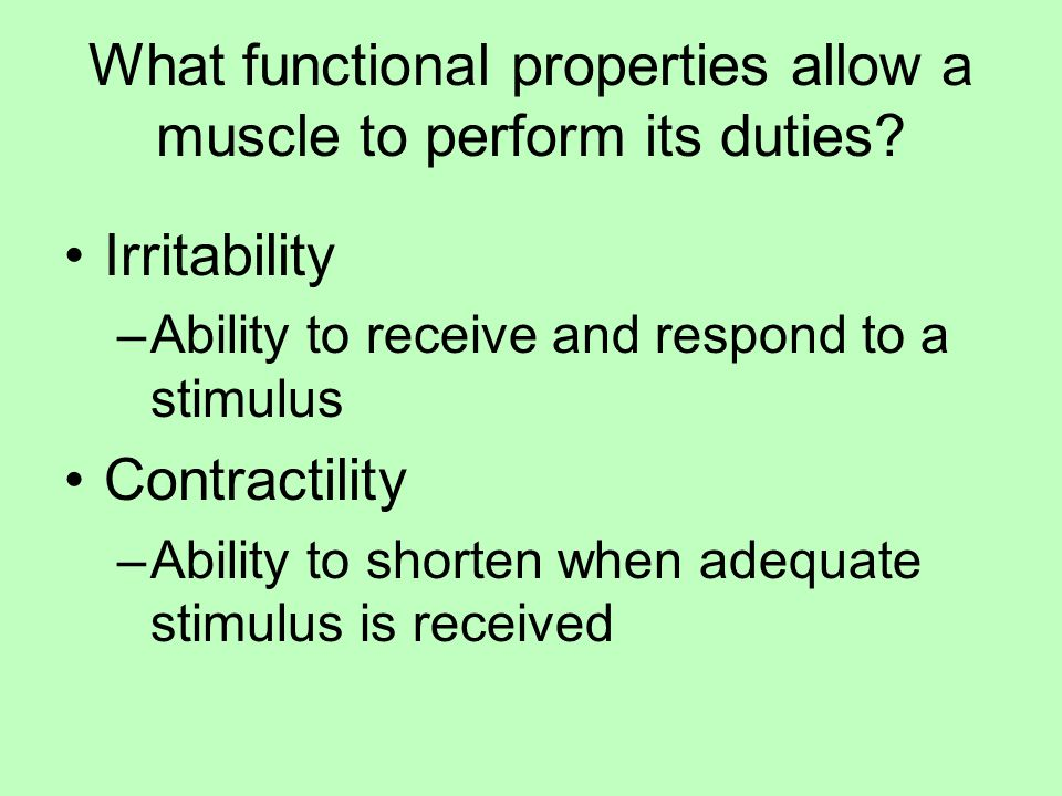 What functional properties allow a muscle to perform its duties.