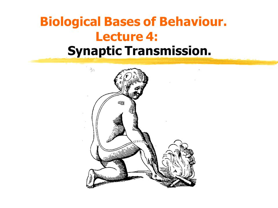 Biological Bases of Behaviour. Lecture 4: Synaptic Transmission.