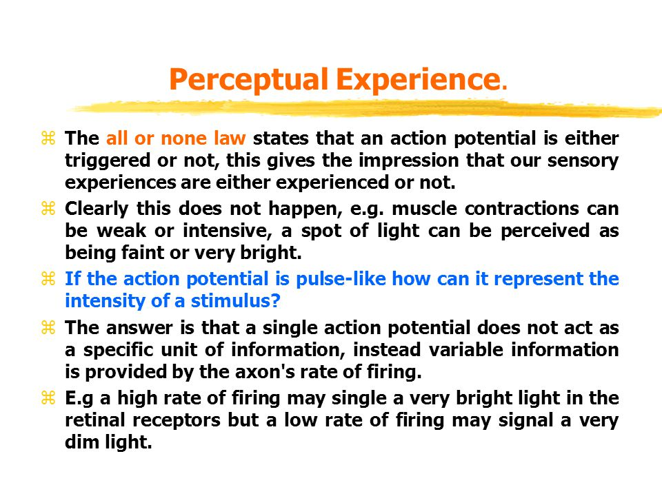 Perceptual Experience. zThe all or none law states that an action potential is either triggered or not, this gives the impression that our sensory exp