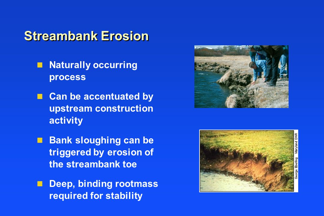 Streambank Erosion n Naturally occurring process n Can be accentuated by upstream construction activity n Bank sloughing can be triggered by erosion of the streambank toe n Deep, binding rootmass required for stability