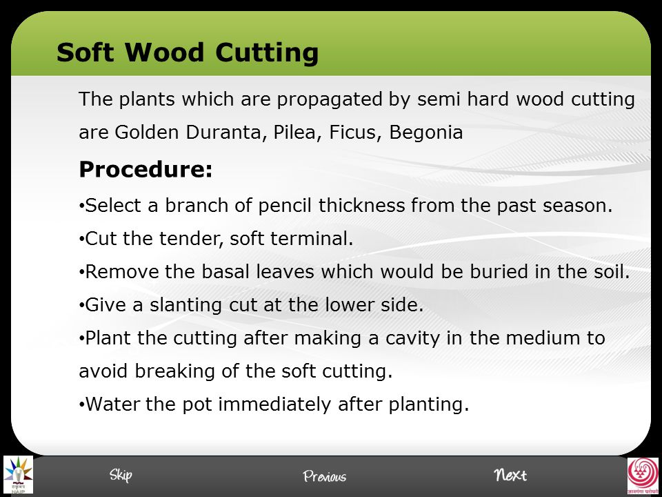 The plants which are propagated by semi hard wood cutting are Golden Duranta, Pilea, Ficus, Begonia Procedure: Select a branch of pencil thickness fro