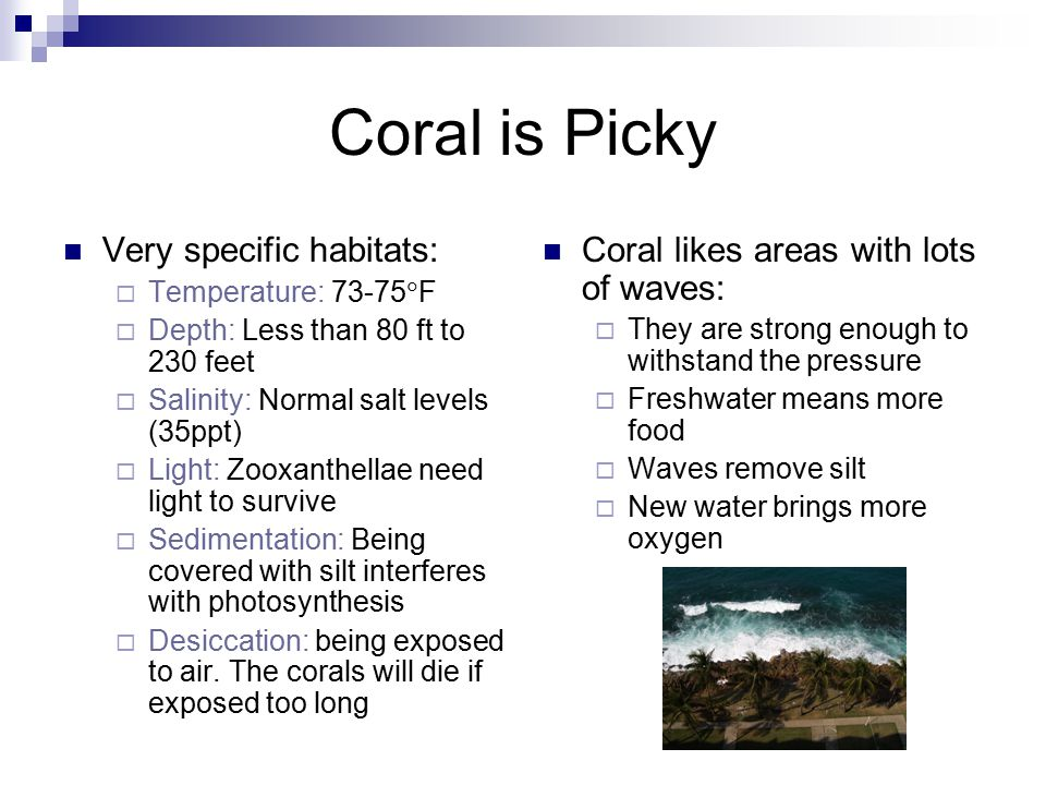 Coral is Picky Very specific habitats:  Temperature: 73-75  F  Depth: Less than 80 ft to 230 feet  Salinity: Normal salt levels (35ppt)  Light: Zooxanthellae need light to survive  Sedimentation: Being covered with silt interferes with photosynthesis  Desiccation: being exposed to air.
