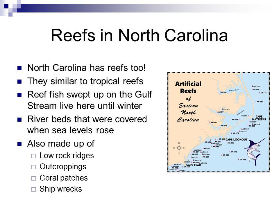 Reefs in North Carolina North Carolina has reefs too.