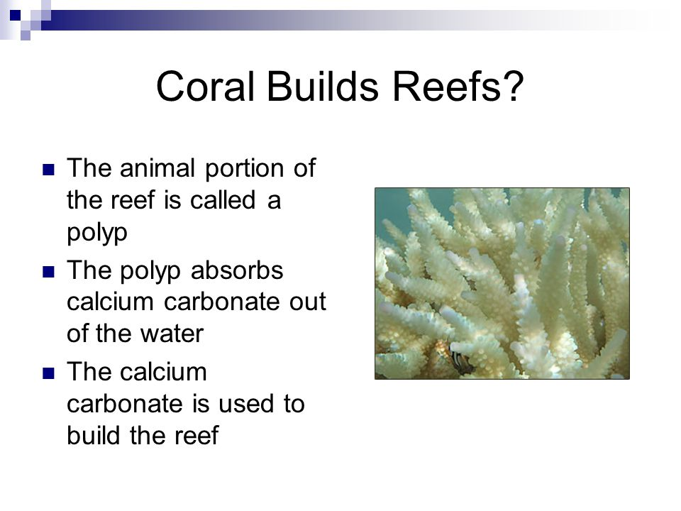 Coral Builds Reefs.