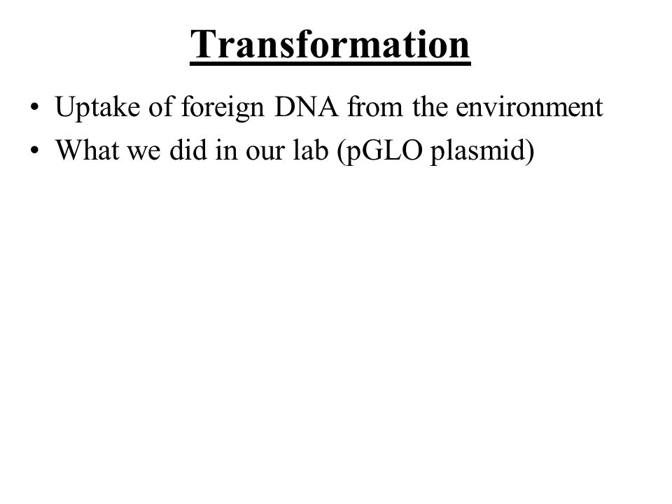 Transformation Uptake of foreign DNA from the environment What we did in our lab (pGLO plasmid)