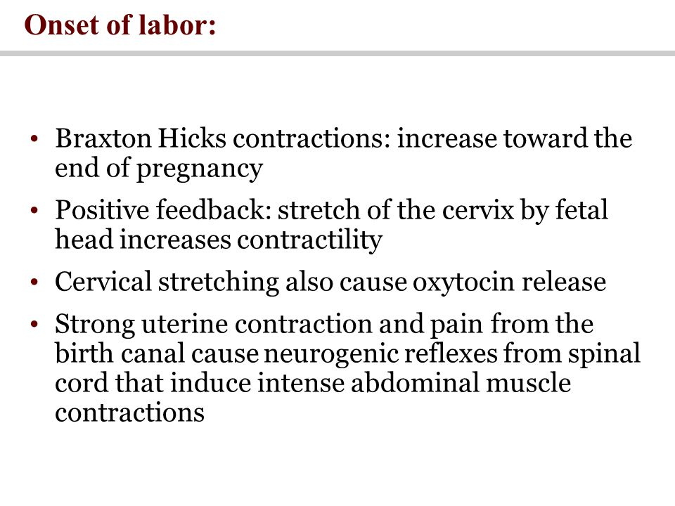 Onset of labor: Braxton Hicks contractions: increase toward the end of pregnancy Positive feedback: stretch of the cervix by fetal head increases contractility Cervical stretching also cause oxytocin release Strong uterine contraction and pain from the birth canal cause neurogenic reflexes from spinal cord that induce intense abdominal muscle contractions