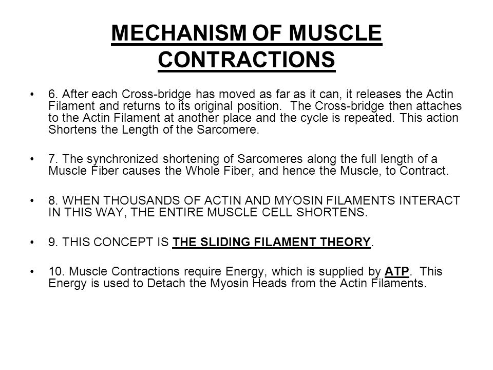 MECHANISM OF MUSCLE CONTRACTIONS 6.