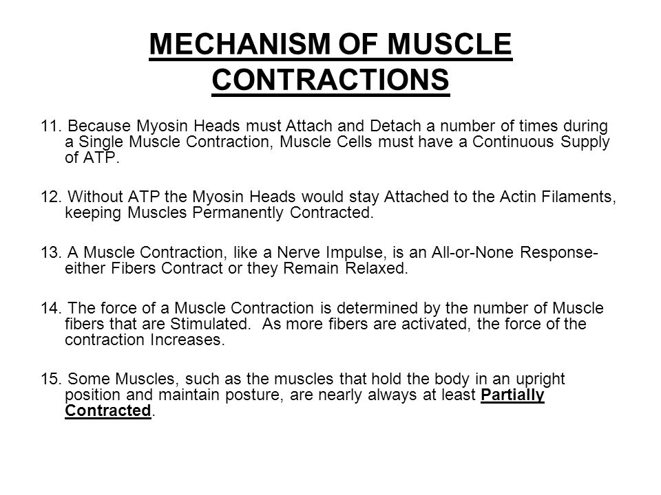 MECHANISM OF MUSCLE CONTRACTIONS 11.