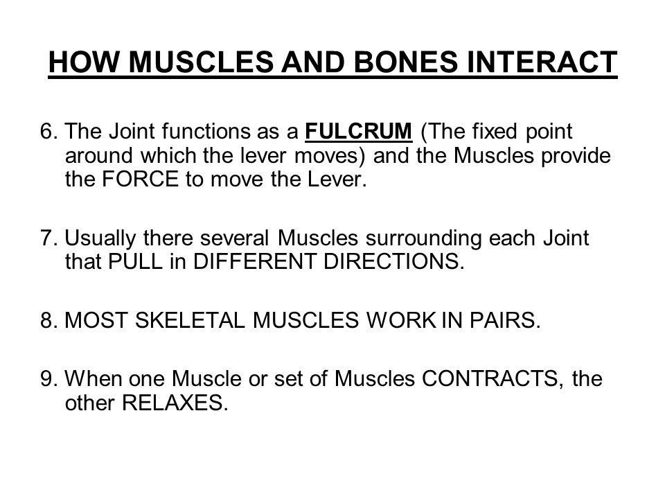 HOW MUSCLES AND BONES INTERACT 6.