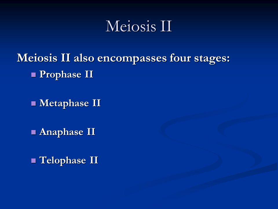 Meiosis II Meiosis II also encompasses four stages: Prophase II Prophase II Metaphase II Metaphase II Anaphase II Anaphase II Telophase II Telophase I