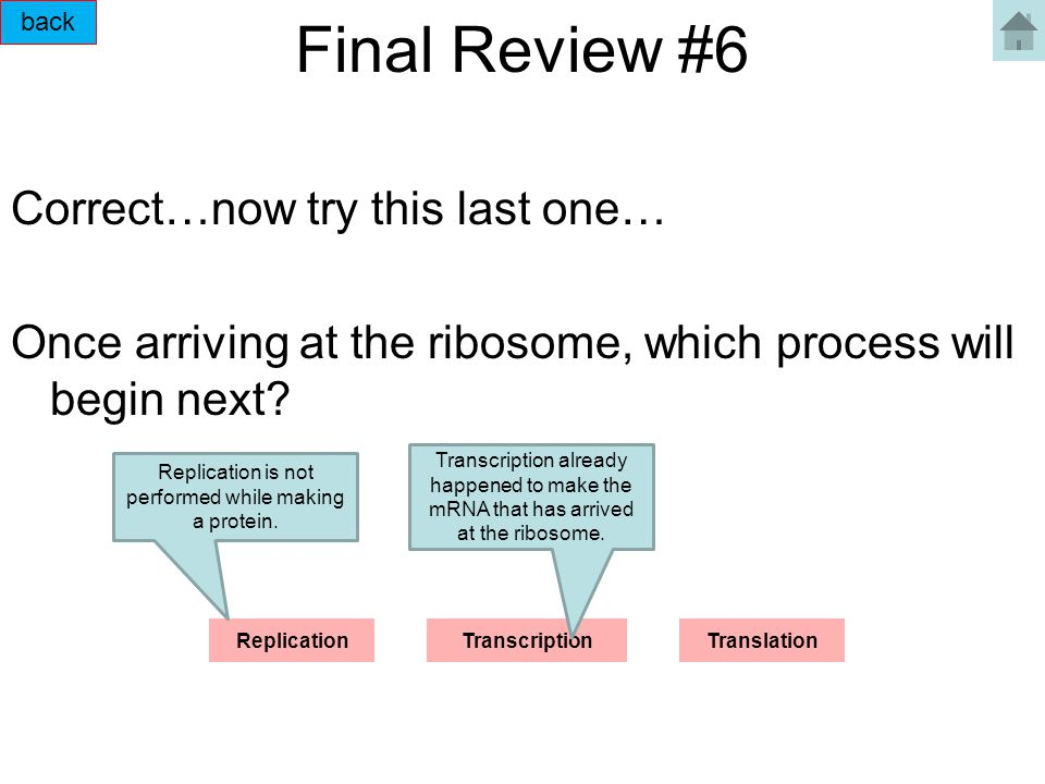 Final Review #6 Correct…now try this last one… Once arriving at the ribosome, which process will begin next? ReplicationTranscriptionTranslation back