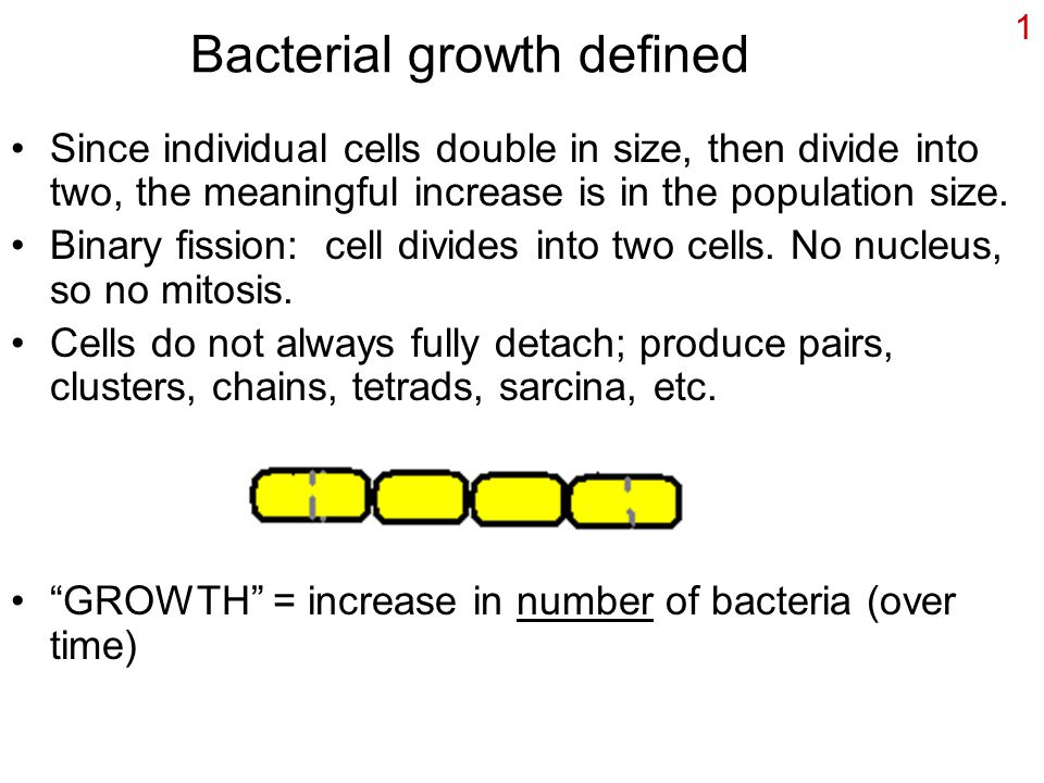 1 Bacterial growth defined Since individual cells double in size, then divide into two, the meaningful increase is in the population size.