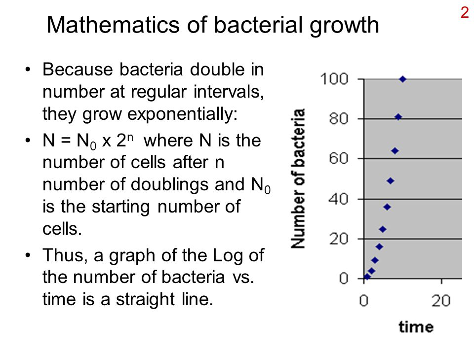 2 Mathematics of bacterial growth Because bacteria double in number at regular intervals, they grow exponentially: N = N 0 x 2 n where N is the number of cells after n number of doublings and N 0 is the starting number of cells.