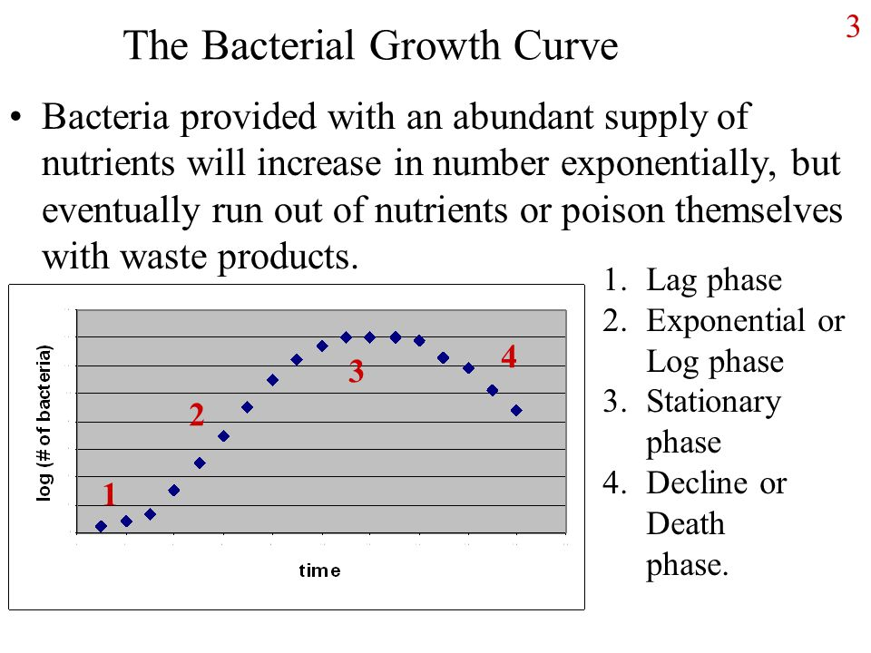 3 The Bacterial Growth Curve Bacteria provided with an abundant supply of nutrients will increase in number exponentially, but eventually run out of nutrients or poison themselves with waste products.