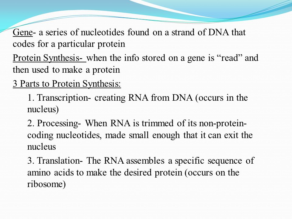 """Gene- a series of nucleotides found on a strand of DNA that codes for a particular protein Protein Synthesis- when the info stored on a gene is """"read"""""""