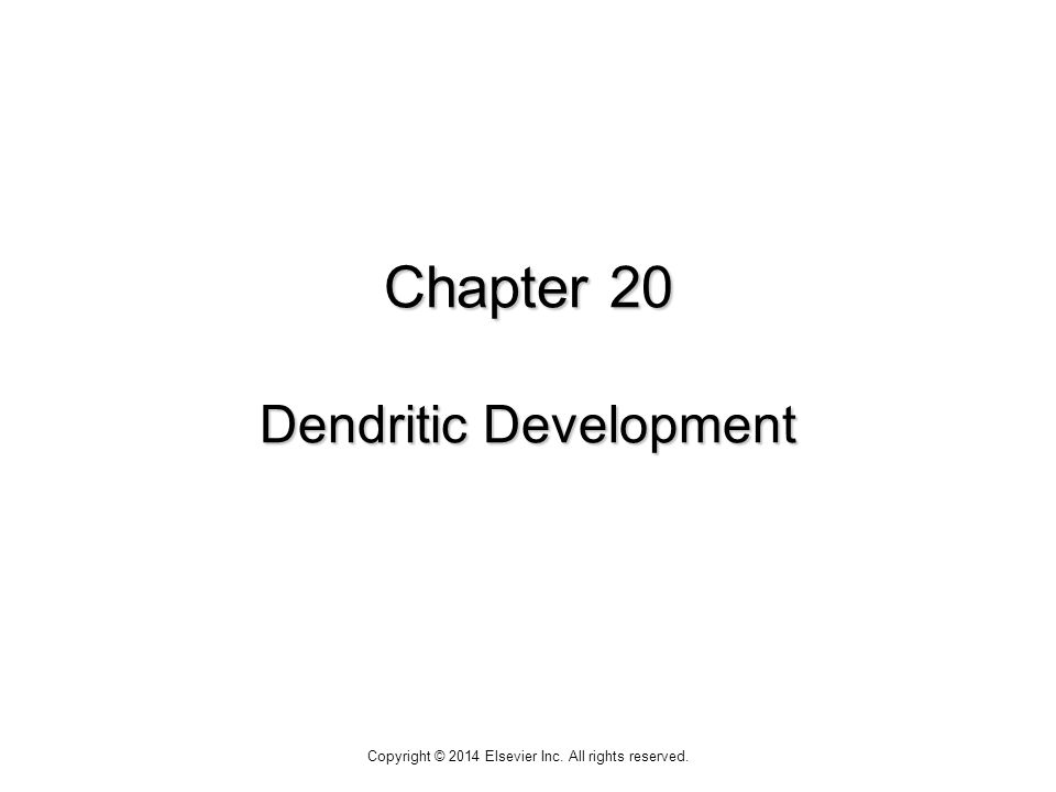 Chapter 20 Dendritic Development Copyright © 2014 Elsevier Inc. All rights reserved.