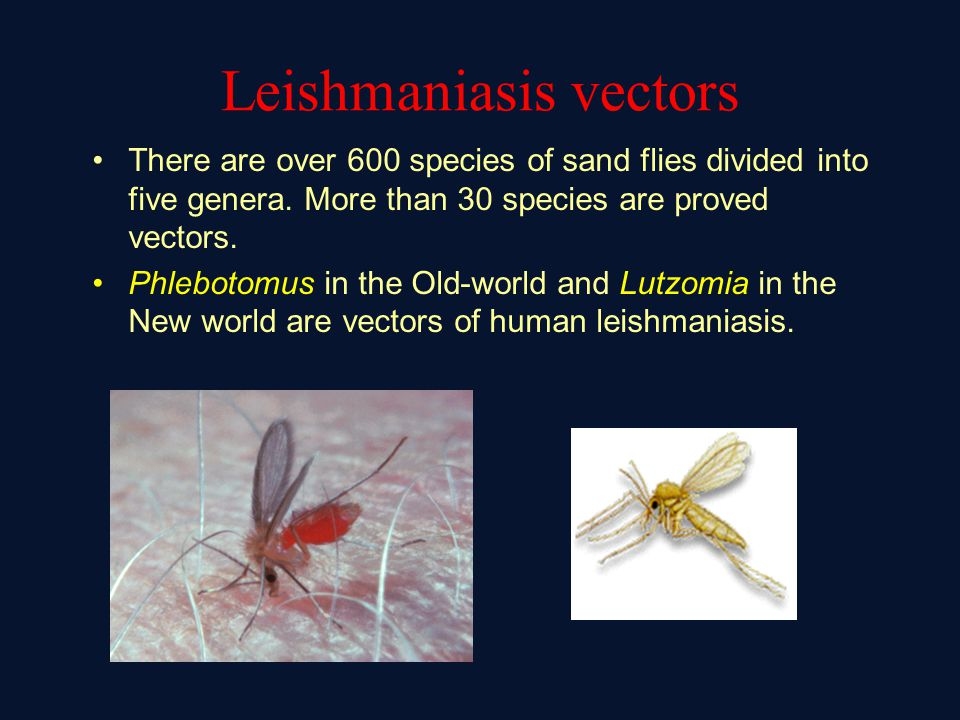 Leishmaniasis vectors There are over 600 species of sand flies divided into five genera.