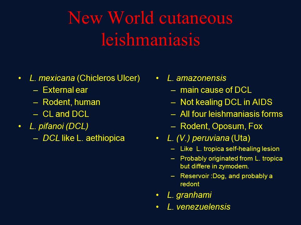 New World cutaneous leishmaniasis L.