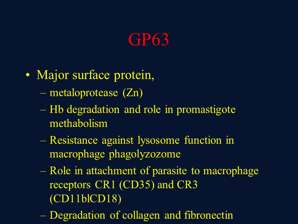 GP63 Major surface protein, –metaloprotease (Zn) –Hb degradation and role in promastigote methabolism –Resistance against lysosome function in macrophage phagolyzozome –Role in attachment of parasite to macrophage receptors CR1 (CD35) and CR3 (CD11blCD18) –Degradation of collagen and fibronectin