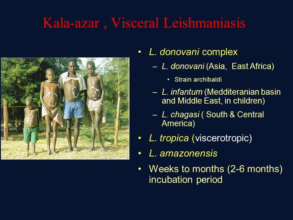Kala-azar, Visceral Leishmaniasis L.donovani complex –L.
