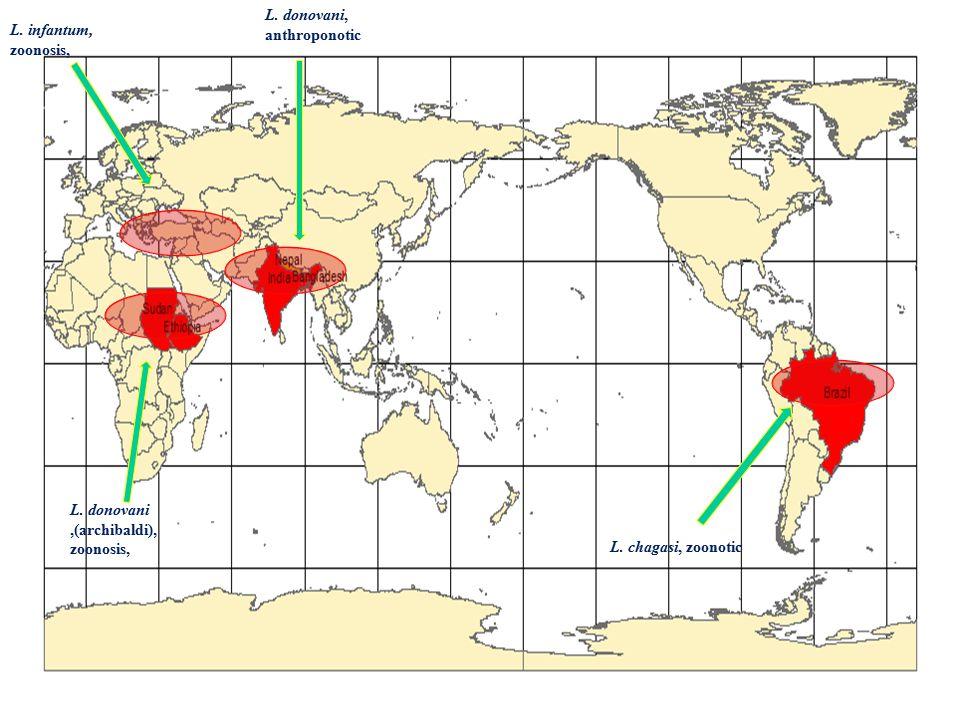 L. infantum, zoonosis, L. donovani,(archibaldi), zoonosis, L. donovani, anthroponotic L. chagasi, zoonotic