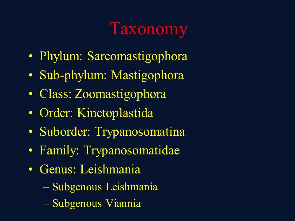 Taxonomy Phylum: Sarcomastigophora Sub-phylum: Mastigophora Class: Zoomastigophora Order: Kinetoplastida Suborder: Trypanosomatina Family: Trypanosoma