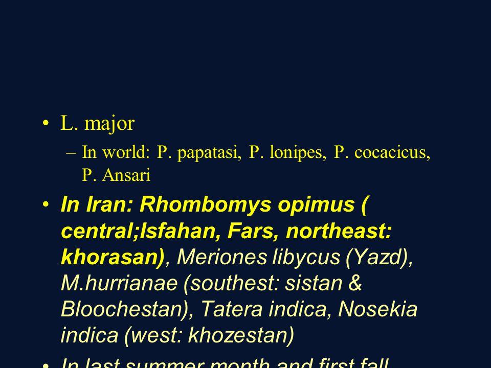L.major –In world: P. papatasi, P. lonipes, P. cocacicus, P.