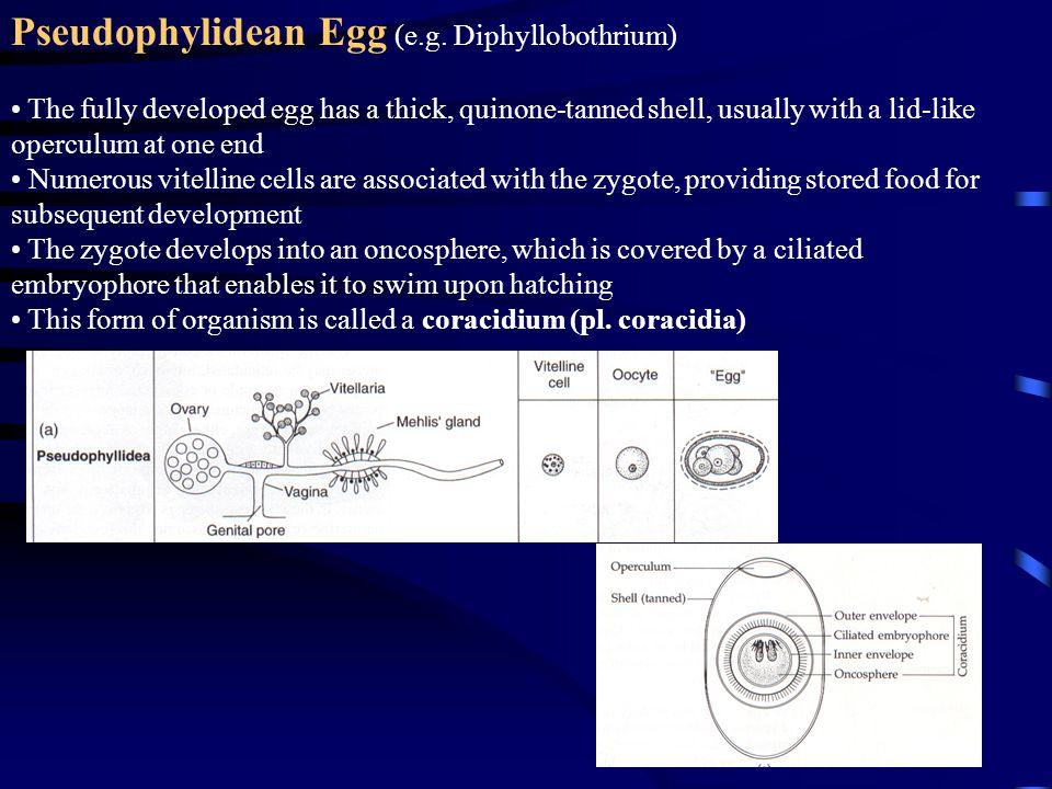 Pseudophylidean Egg (e.g.