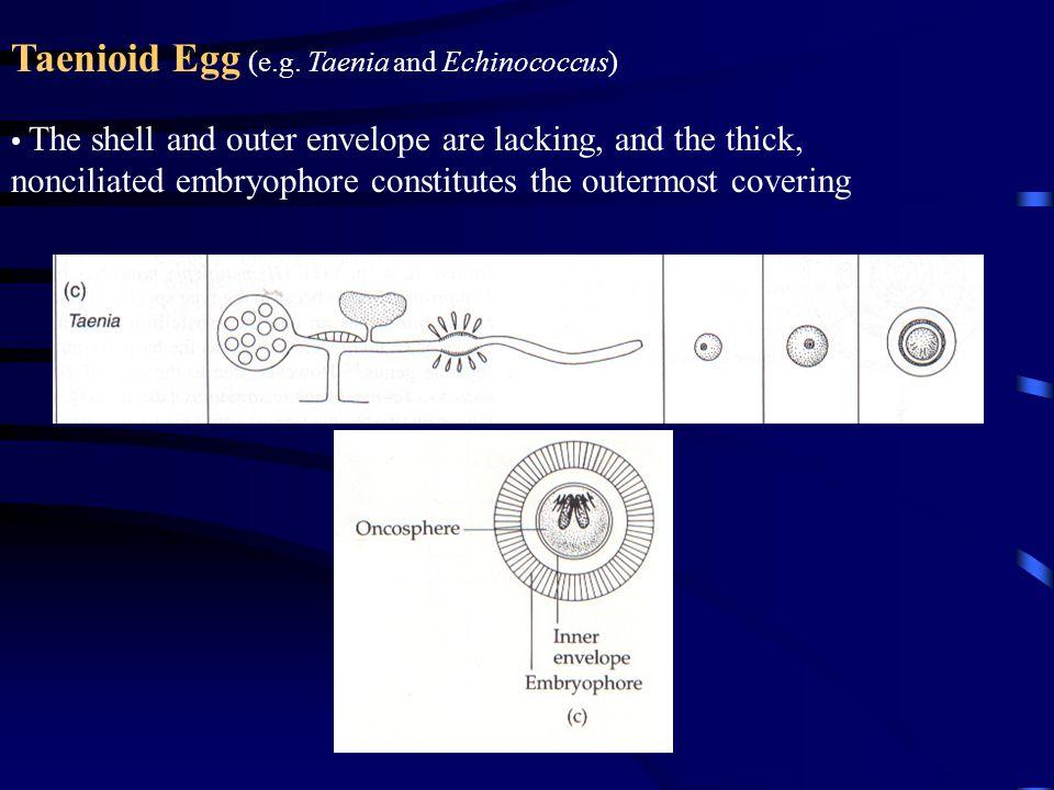 Taenioid Egg (e.g.