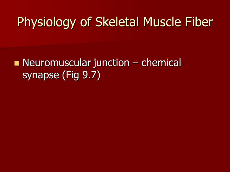 Physiology of Skeletal Muscle Fiber Neuromuscular junction – chemical synapse (Fig 9.7) Neuromuscular junction – chemical synapse (Fig 9.7)