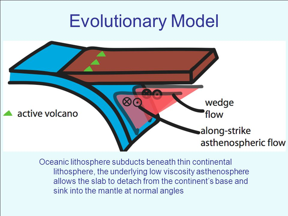 Oceanic lithosphere subducts beneath thin continental lithosphere, the underlying low viscosity asthenosphere allows the slab to detach from the continent's base and sink into the mantle at normal angles Evolutionary Model