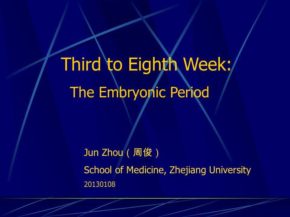 Third to Eighth Week: The Embryonic Period Jun Zhou (周俊) School of Medicine, Zhejiang University 20130108