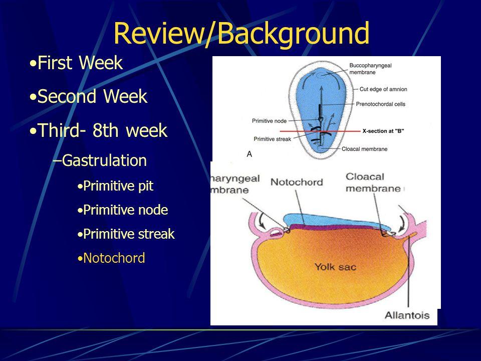 Review/Background First Week Second Week Third- 8th week –Gastrulation Primitive pit Primitive node Primitive streak Notochord
