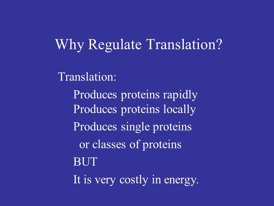 Modified from Sonenberg et al., eds.Translational Control of Gene Expression (2000), p.