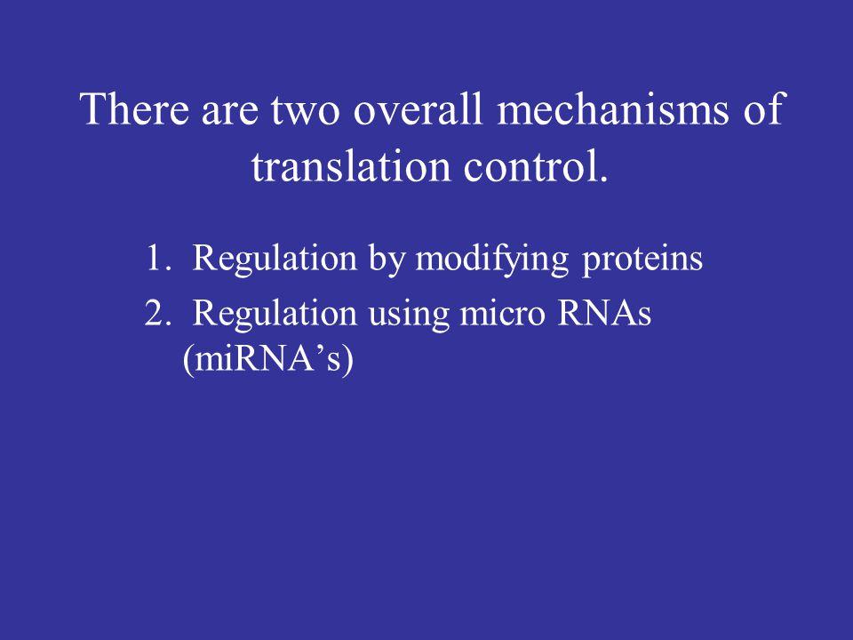 Mechanism of Translation