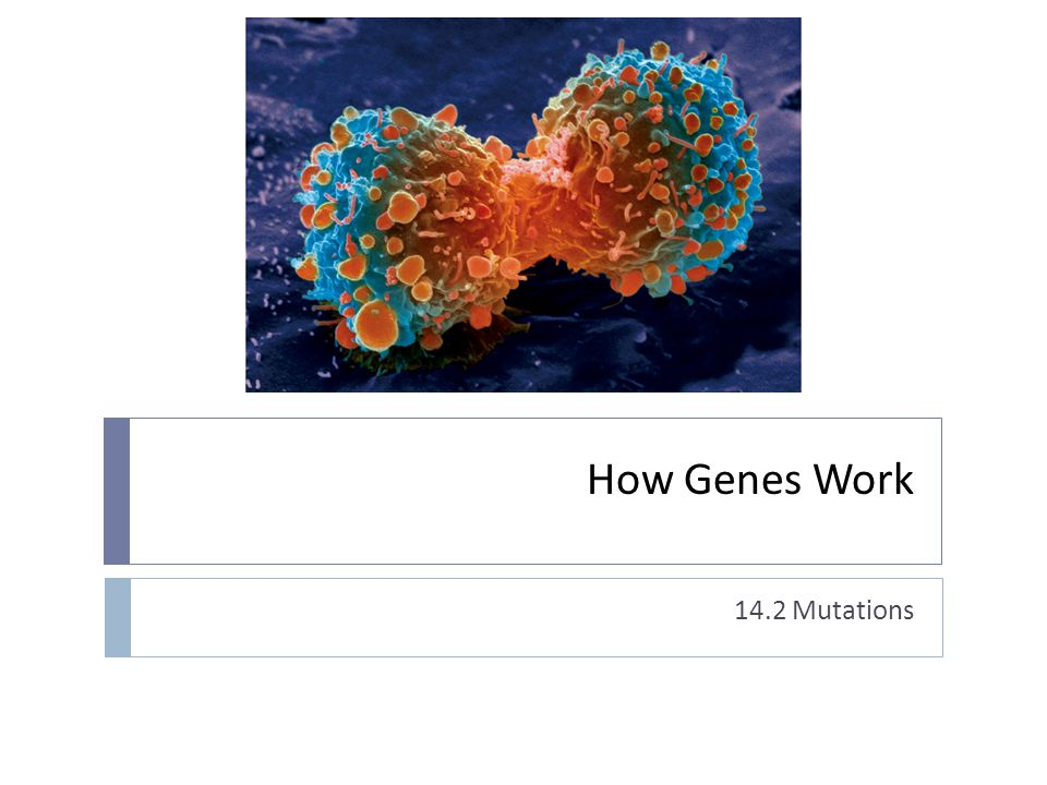What is a mutation.